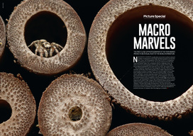 Macro Marvels: Close-up Photography of the Year Awards